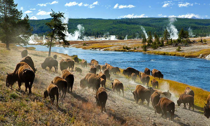 Parc Yellowstone Etats Unis