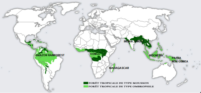 les zones des différentes forêts tropicales de la planète